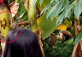 Mindanaoans Are Congregating To This Banana Tree Because It Has An 'Image Of Jesus Christ'